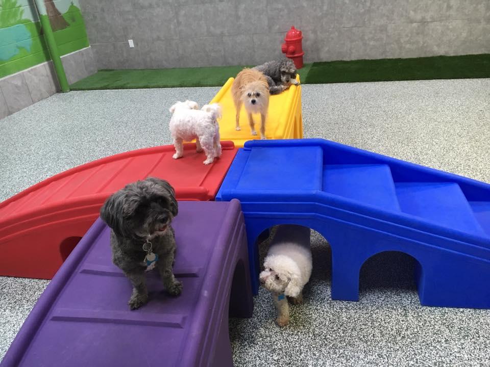 Our Dog House, Ventura California