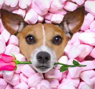 Why Your Dog is the Perfect Date for Valentine's Day