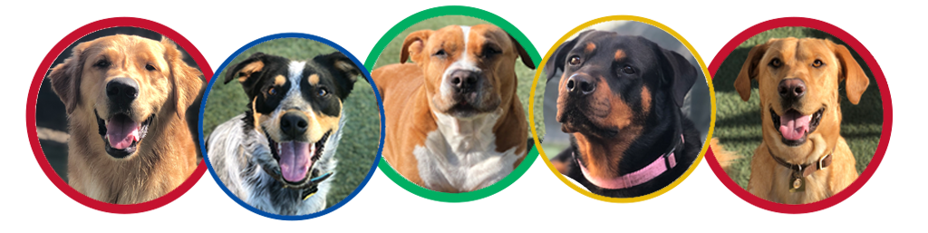 Dog Boarding & Daycare | Kennel | Our Dog House Ventura