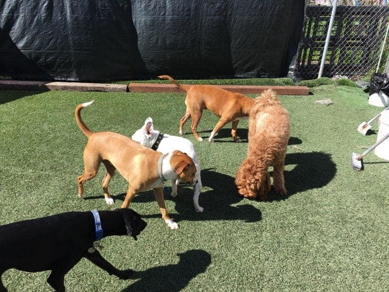 group of dogs in outdoor play area
